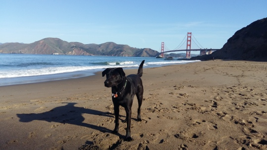 Porter posing on beach with Golden Gate Bridge