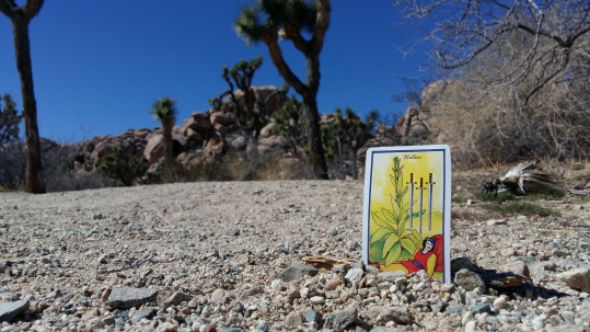 Magick in Joshua Tree