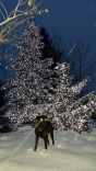 Christmas Tree & Porter