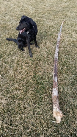 Porter versus big stick