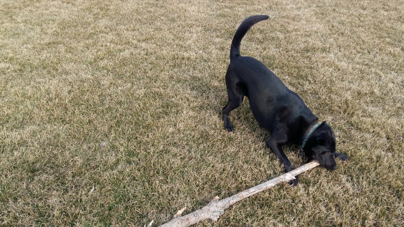Porter grapples with the stick of sticks
