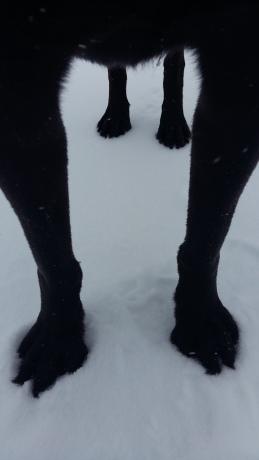 Porter Paw Fetish In Snow