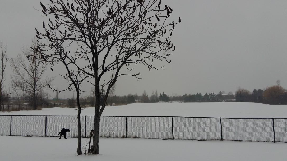 Porter Potty In Snow