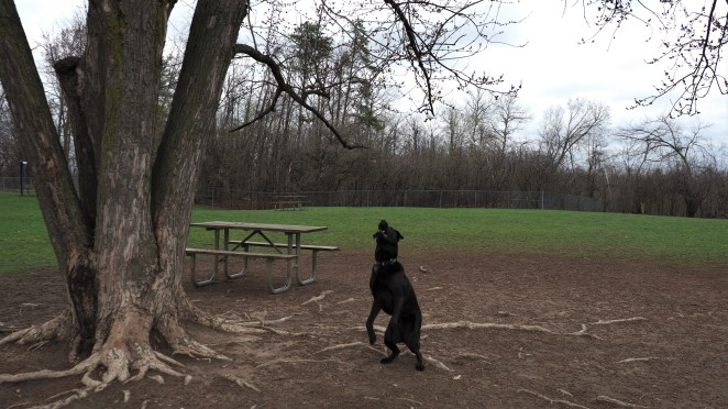 White Spruce Dog Park Brampton