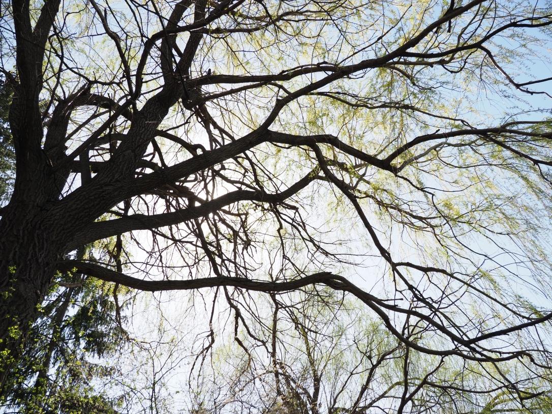 Tree Canopy in Brampton