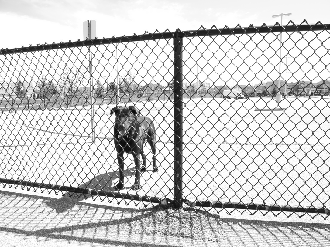 Urban Dogscapes in Brampton